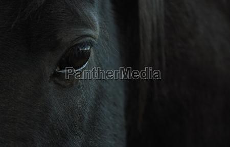 vista cavallo