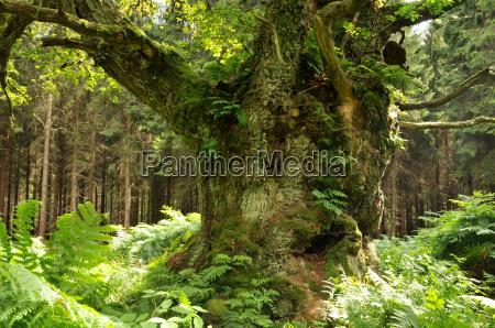 vecchio tronco dalbero