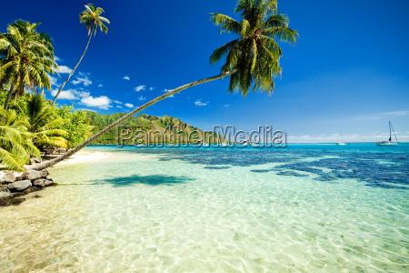 albero di palme che incombe su