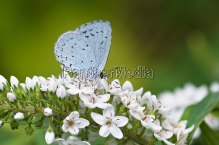animale insetto insetti farfalla animali farfalle