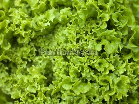 cibo colore verde freschezza orizzontale studio