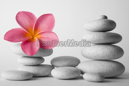 stone stack e fiore del frangipani
