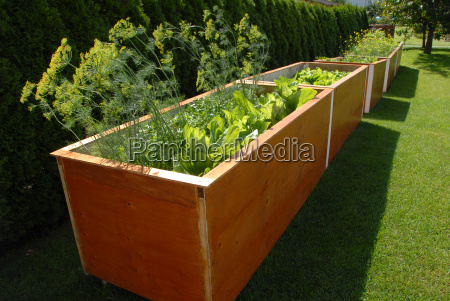 bio giardino clorofilla verdura letto giardini