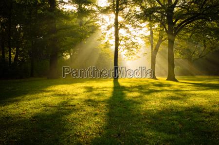 alberi nella luce posteriore