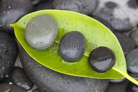 pietre sulla foglia verde