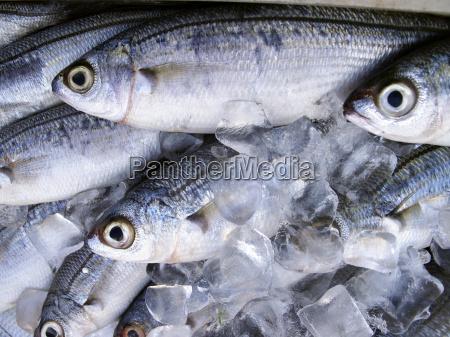 cibo pesce mercato del pesce mercato