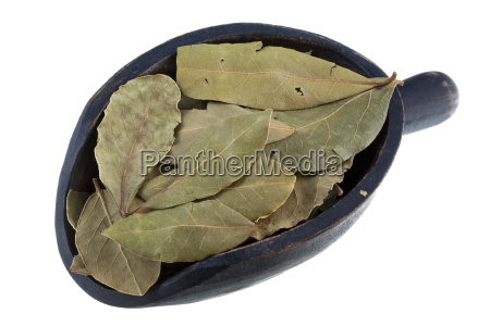 misurino di foglie di alloro secche