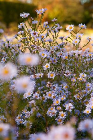 primo piano giardino fiore fiori flora