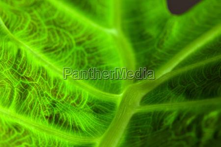 foglia primo piano close up astratto