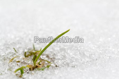 filo derba prato erba neve