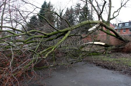 albero tempesta rovesciato vento tempo
