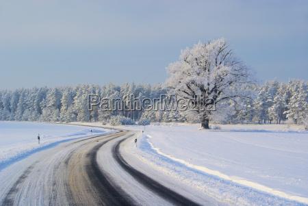 albero campo quercia liscio ghiaccio strada