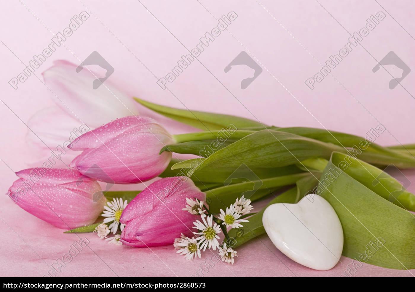 tulipani, rosa - 2860573