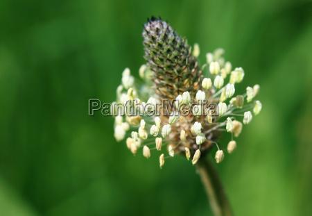 primo piano close up fioritura flora