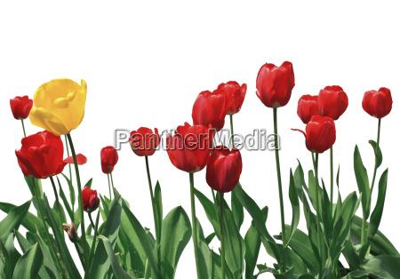 rilasciato giardino fiore estate primavera impianto