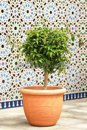 albero pentola pianta in vaso orientale