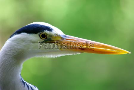 uccello animali uccelli primavera berlino airone