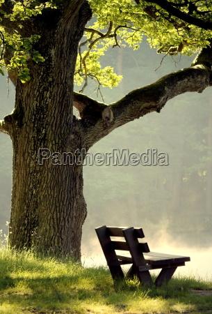 quercia mattina luogo di riposo facilitare
