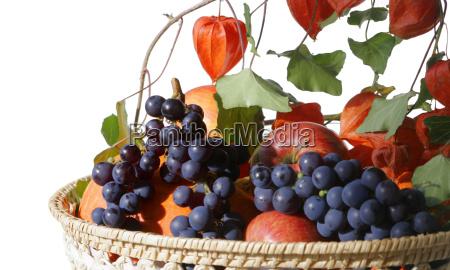 garden crop in basket