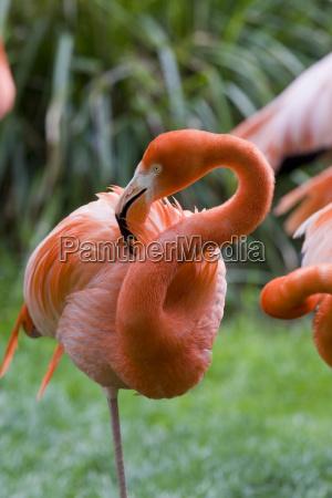natura piumaggio piuma rosa fenicottero