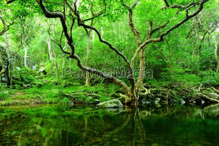 albero e lacqua nella giungla
