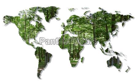 distruzione delle foreste nel mondo
