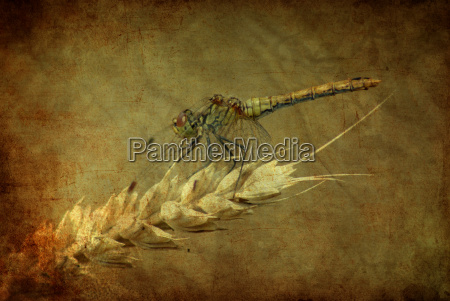 ambiente piantare seminare animali berlino libellula