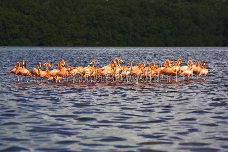 viaggio viaggiare animale uccello selvaggio uccelli