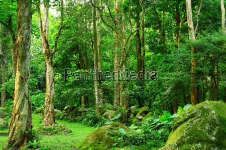 albero legno giungla prato foresta
