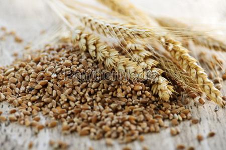 grano intero chicchi di grano primo