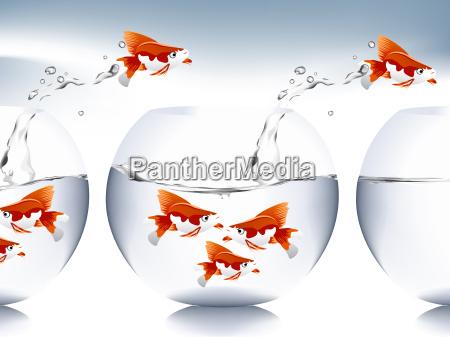 salto di pesci rossi