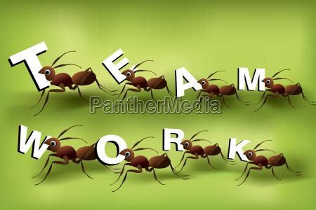 lavoro di squadra teamwork spirito passione