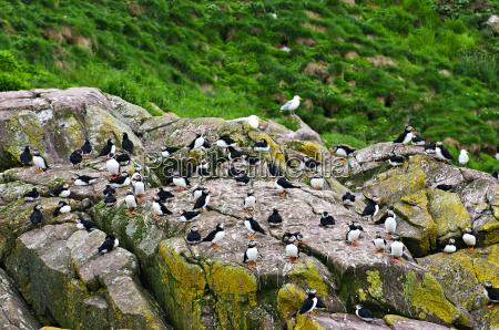 uccelli massi macigni sedimenti pietre