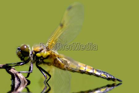 ambiente animali berlino libellula libellule natura