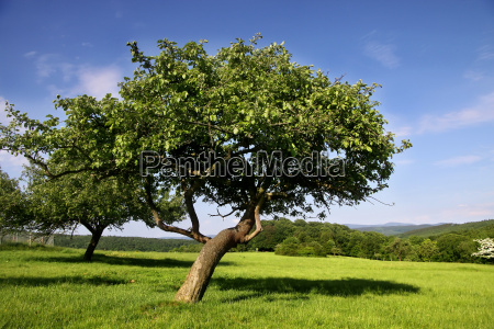 orchard in estate