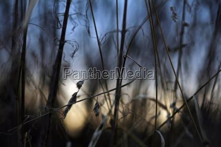 inverno tramonto sera erbe secco morto