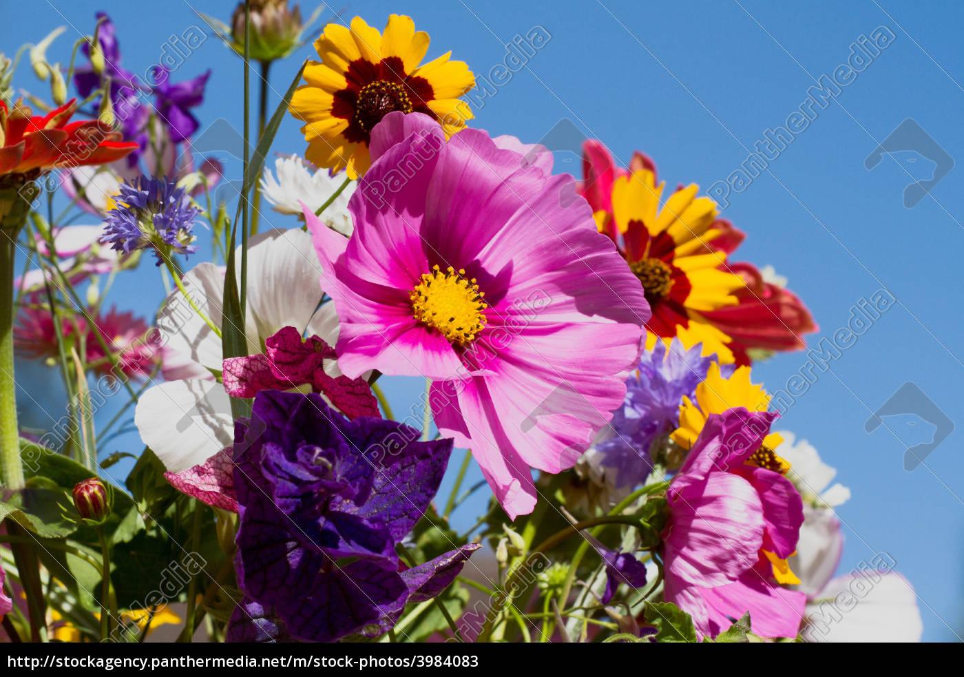 Bouquet colorato di fiori estivi foto stock 3984083 for Fiori estivi perenni