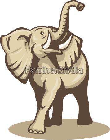 elefante zanna toro illustrazione natura africano