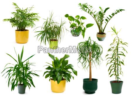 set di otto piante domestiche vacanti
