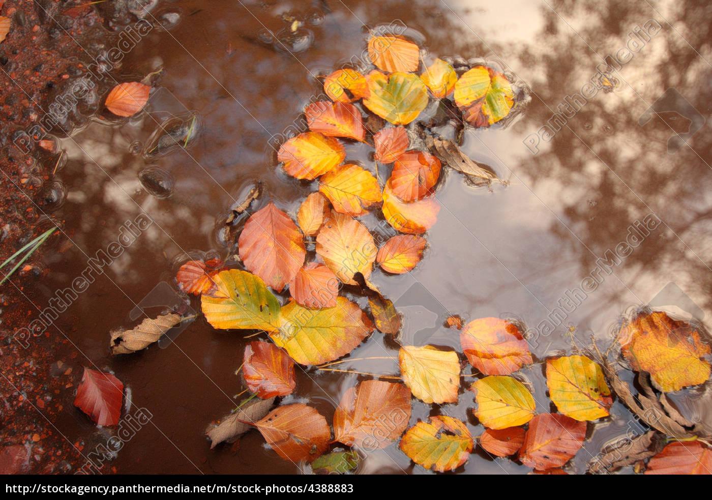 bella, autunno, in, scozia - 4388883