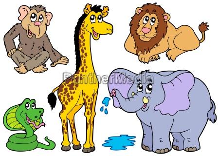 animale africa animali zoo africano safari