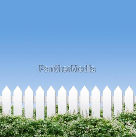 giardino arbusto recinzione siepe recinto recintato