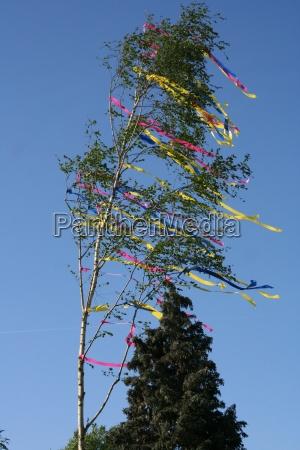 maibaum nel vento