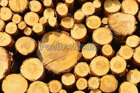 woodpile pila di legno 34