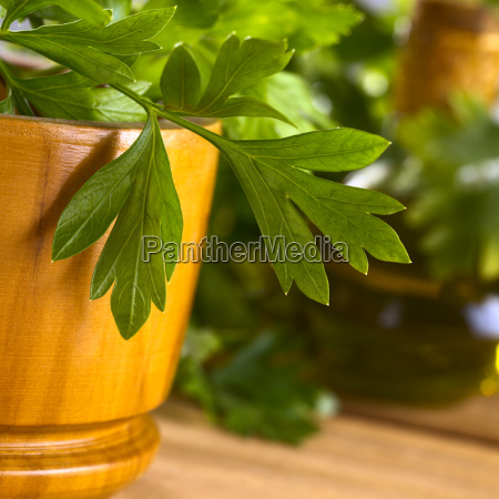parsley with wooden mortar
