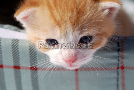animale gattino carino gatto gatta gattini
