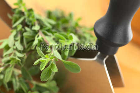 marjoram with mezzaluna