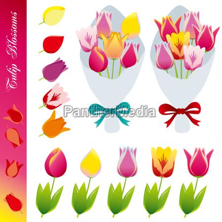 fiore ornamento primavera impianto tulipano elemento
