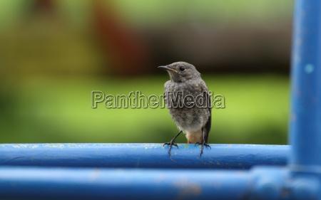 uccello uccelli animale giovane uccellino atto
