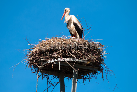 uccello uccelli caucasico bianco rami becco